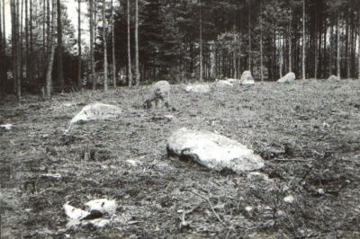 Krąg nr I przed badaniami archeologicznymi (widok od strony południowej)